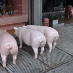 nyc #15 - pigs are predestined
